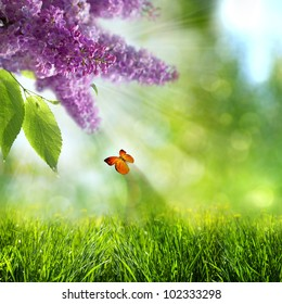 abstract summer backgrounds with lilacs flowers and butterfly