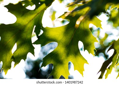 Abstract sunlight shining through brightly colored leaves with blur
