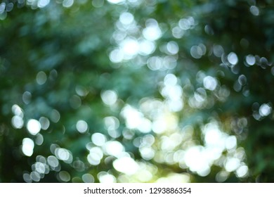 abstract sunlight through tree green lush nature, image blur light bokeh background