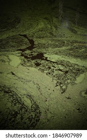 Abstract swirls of green algae on surface of dark pond water