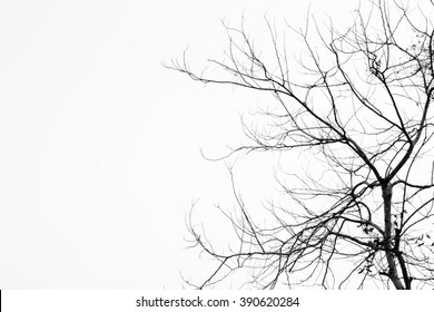 Abstract symbol idea. The sadness of tree, Leaves branch silhouette with black and white style.