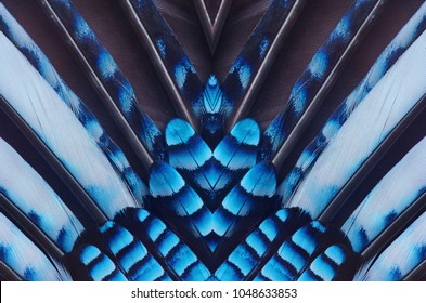 Abstract symmetric pattern of feathers of Eurasian jay with blue stripes close-up as background. Ornamental surreal tracery of bird feathers. The image with mirror effect.