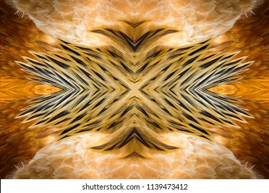 Abstract symmetric pattern of feathers of a rooster