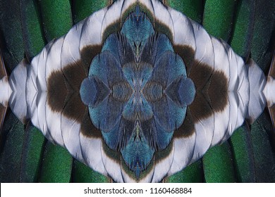 Abstract symmetric pattern of feathers of wild duck close-up as background. Macro of colorful feathers of wild duck. Seamless ornamental surreal tracery of bird feathers. The image with mirror effect.