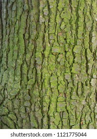"""Abstract Texture Background """"Nature wood"""""""