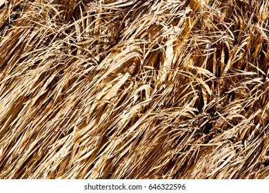 abstract texture of a bamboo wall background in oman