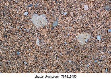 Abstract texture of dry yellow grass and beach stones.