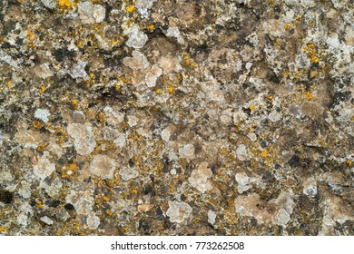 abstract texture of a stone and vegetation for a background or for wallpaper