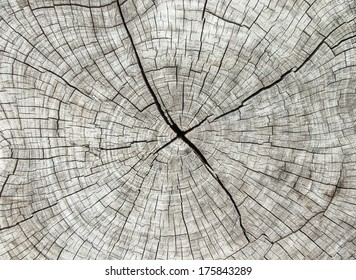 Abstract texture of tree stump, crack wood ancient