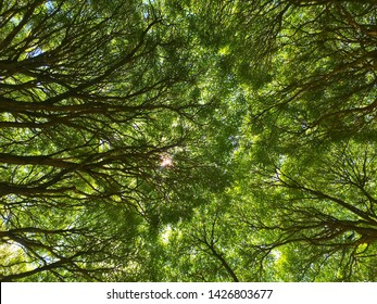 Abstract thick branches from below