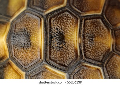 Abstract Tortoise Shell