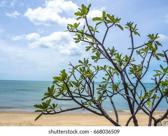 Abstract of tree branch and the beach for background.