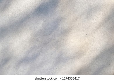 Abstract of tree branch shadow on white wall with warm light in morning