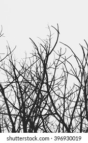 abstract Tree branch silhouette against white background