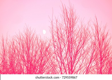Abstract Tree Branches Silhouette Patterns and Moon Background