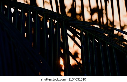 Abstract tree leaves with sunset background unique photograph