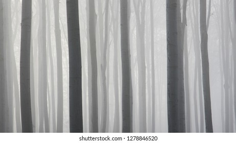 abstract tree lines