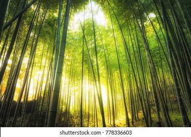 Abstract Tree Nature Background , Mystical green Bamboo forest with sun flare at Arashiyama, Japan.