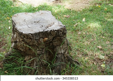 abstract of tree stump in the tropical garden