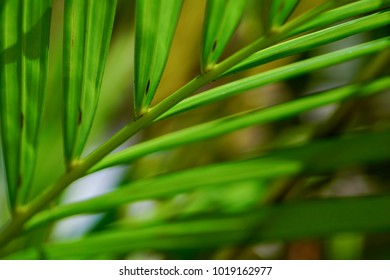 Abstract tropical nature: artistic macro of green palm tree leaf