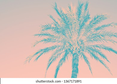 Abstract tropical nature background. Silhouette of palm tree vintage duotone pink teal toned faded grungy effect. Funky style. Poster beach pool party invitation template. Product surface design