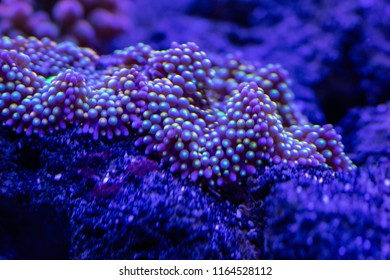 abstract underwater world of corals and microorganisms closeup