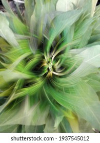 abstract with a very blurred green vegetables and fruit background