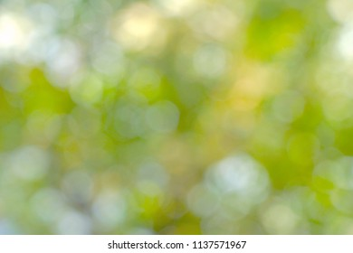 Abstract vibrant green blurred background with light and bokeh. Natural image from tree with sunlight. Feel fresh. Free space for text. Defocus.