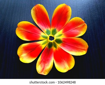 abstract with vibrant tulip petals.