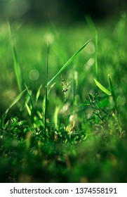 Abstract view on the spring grass