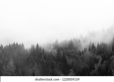 Abstract view of pine trees in misty autumn landscape in Bavaria