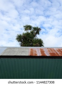 Abstract view of retro corrugated iron rusty shed with New Zealand cabbage tree in background