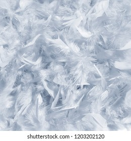 Abstract view of soft background of grey color feathers