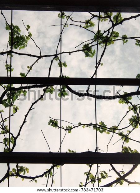 Abstract vines and sky