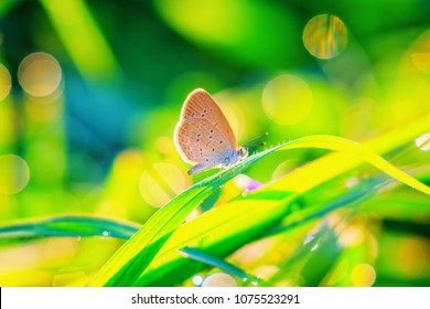 Abstract vintage picture style of butterfly on green grass and dew drop in sunset time background, selected focus.