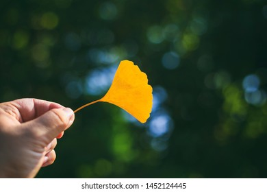 Abstract vintage picture style of hand holding dried Ginkgo leaf on green blurry background, selected focus.
