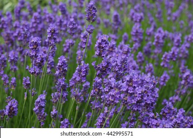 Abstract violet flowers on garden