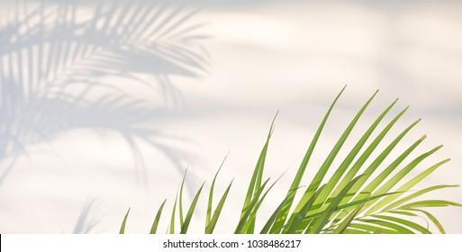 Abstrakte Tapete und Hintergrund mit Kopienraum. Grüne Blätter und Schatten auf weißem Beton