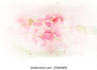 Abstract watercolor illustration of blossom pink flower (Rangoon creeper). Watercolor painting on paper. Floral watercolor illustration.