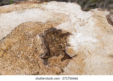 Abstract, wavy pattern in the wood of a tree stump