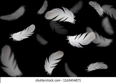 Abstract white bird feathers floating in darkness. Isolated on black background