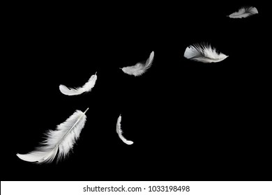 Abstract white feather floating in the air, isolated on black bakground