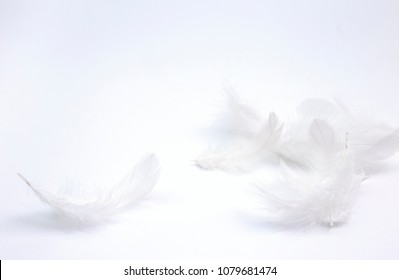 Abstract white feather on white background