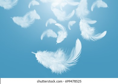 Abstract white feathers falling in blue sky