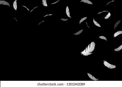 Abstract white feathers floating in the dark. isolated on black background.