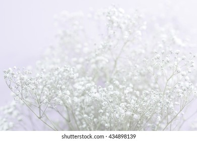 Abstract white flowers background (Gypsophila flower) blurred , Selective focus