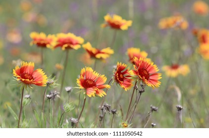 abstract wild flowers on summer meadow