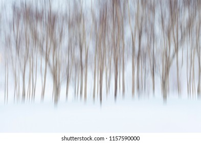 Abstract Wintry Background with Motion Blurred Birch Trees and Snow