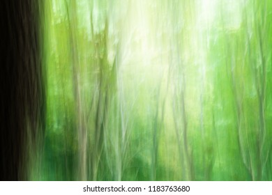 Abstract Zen Forest