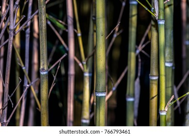 abstraction of bamboo thickets in the rays of the setting sun